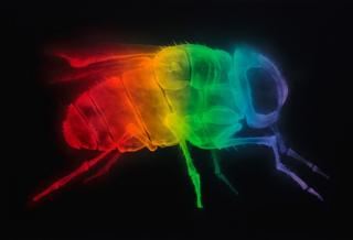Spray paint X-ray art by Shok-1
