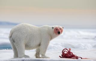 North of Svalbard in the Arctic - Joshua Holko/www.tpoty.com