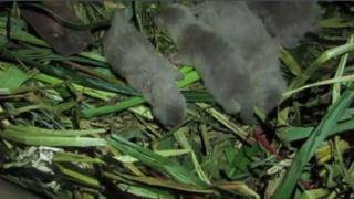 New born otters