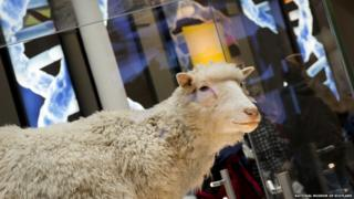 Dolly the Sheep on display at the National Museum of Scotland