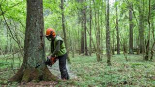 Вирубування лісу