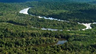 Vista da floresta amazônica no município de Novo Progresso (PA)
