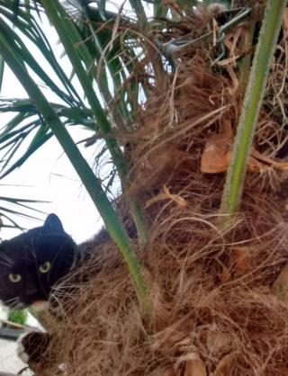 Cat in trap in tree