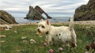 Casper at Bow Fiddle Rock