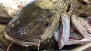 Dead cod head