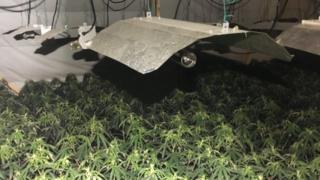 Cannabis in Underwood Leisure Centre