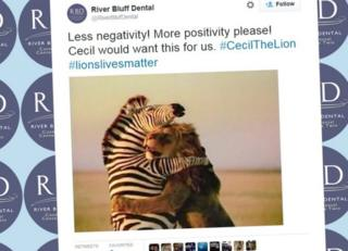 A parody Twitter account for Walter Palmer's dental practice has been set up to mock the dentist