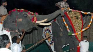 हाथी, मौत, जानवर, तमिलनाडु, केरल