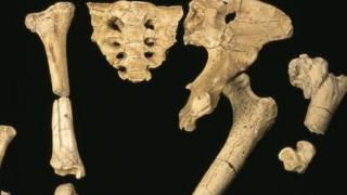 Кости скелета возрастом в 3.2 млн лет