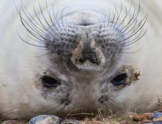 A seal lying upside down