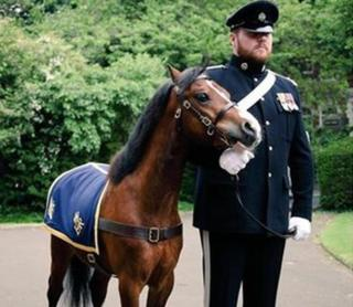 Trooper Jones with Farrier Major Miles Davies at the state opening of the Welsh Assembly