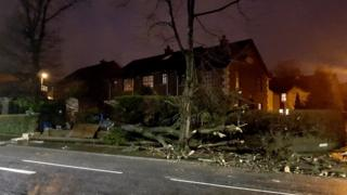 Trees down in Fortwilliam Park, north Belfast
