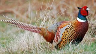 The consultation is part of an official review into the future of animal shooting on Wales' public estates
