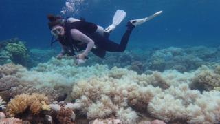 Una mujer buzo inspecciona la Gran Barrera de Arrecifes