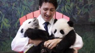 Justin Trudeau with two pandas at Toronto Zoo