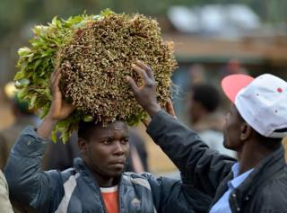 Mfanyibiashara wa Miraa nchini Kenya: Nembo ya Miraa yakataliwa na msajili wa vyama Kenya