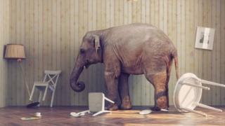 Elefante na sala