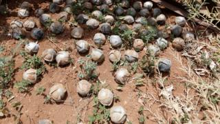 Dozens of cluster bomblets collected in a field in a town in southern Idlib, Syria