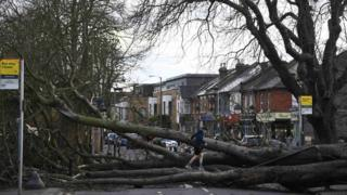 A fallen tree brought down by Storm Doris lies across a main road in Isleworth in London