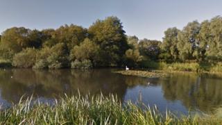 Swan near Provan Hall