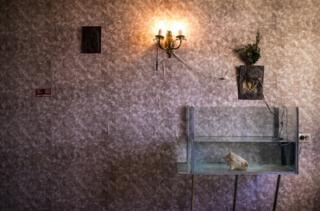 A conch shell provides shelter for the lone minnow in a fish tank in a bedroom