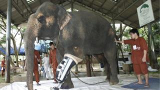Gajah, thailand