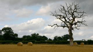 Bales and tree in a field (Image: BBC)