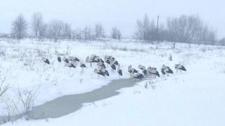 Лелеки замерзають