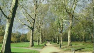 倫敦格林公園的樹木