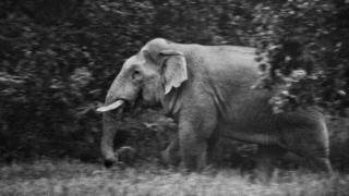 چھتیس گڑھ میں ایک جنگلی ہاتھی