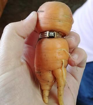 El anillo insertado en la zanahoria encontrada en Alberta, Canadá