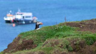 Puffin on Lunga island