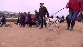 Bbc News Cornwall Dog Last Walk