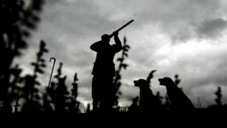 A man and his hunting dogs out shooting