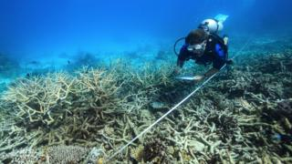 Severe coral bleaching on Australia's Great Barrier Reef