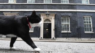 Palmerston the Foreign Office cat pads past 10 Downing Street