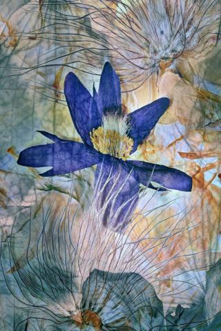 Flores color crema con una color púrpura en el centro.
