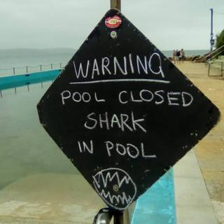 "A sign at Sydney's Palm Beach says: ""Warning. Pool closed shark in pool."""