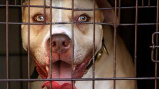 Pitbull seized in London