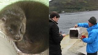 Baby otter and it and its carrier being put on to the ferry