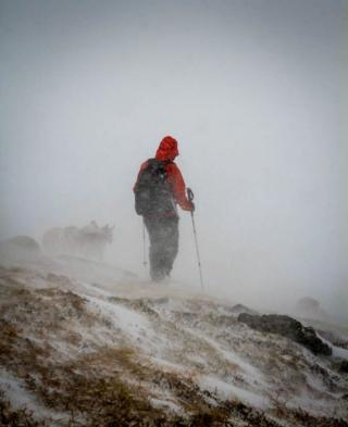 A walker and dogs in snow and wind in Southern Cairngorms