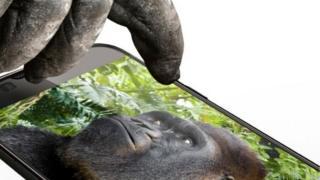 Goril camı