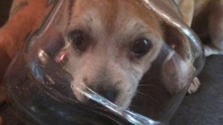 Buddy the puppy