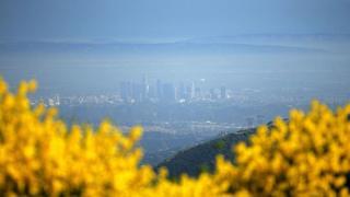Лос-Анджелес у тумані