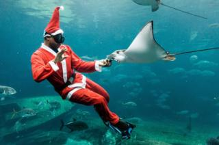 A South African diver dressed as Santa Claus feeds a stingray as he swims in an aquarium during a show before Christmas at Africa's largest marine theme park, uShaka Sea World, in Durban on December 19, 2017.