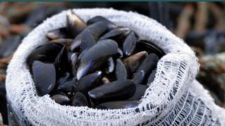 Shetland Mussels website screen grab