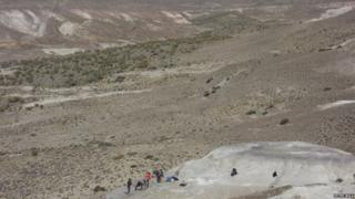 The fossils were unearthed in Patagonia, Argentina