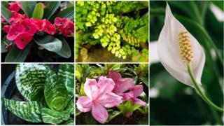 Plantas domésticas