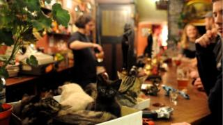 Cats in a box in the Bag of Nails Pub in Bristol