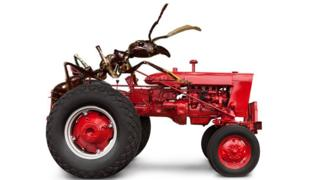 Ant riding a tractor